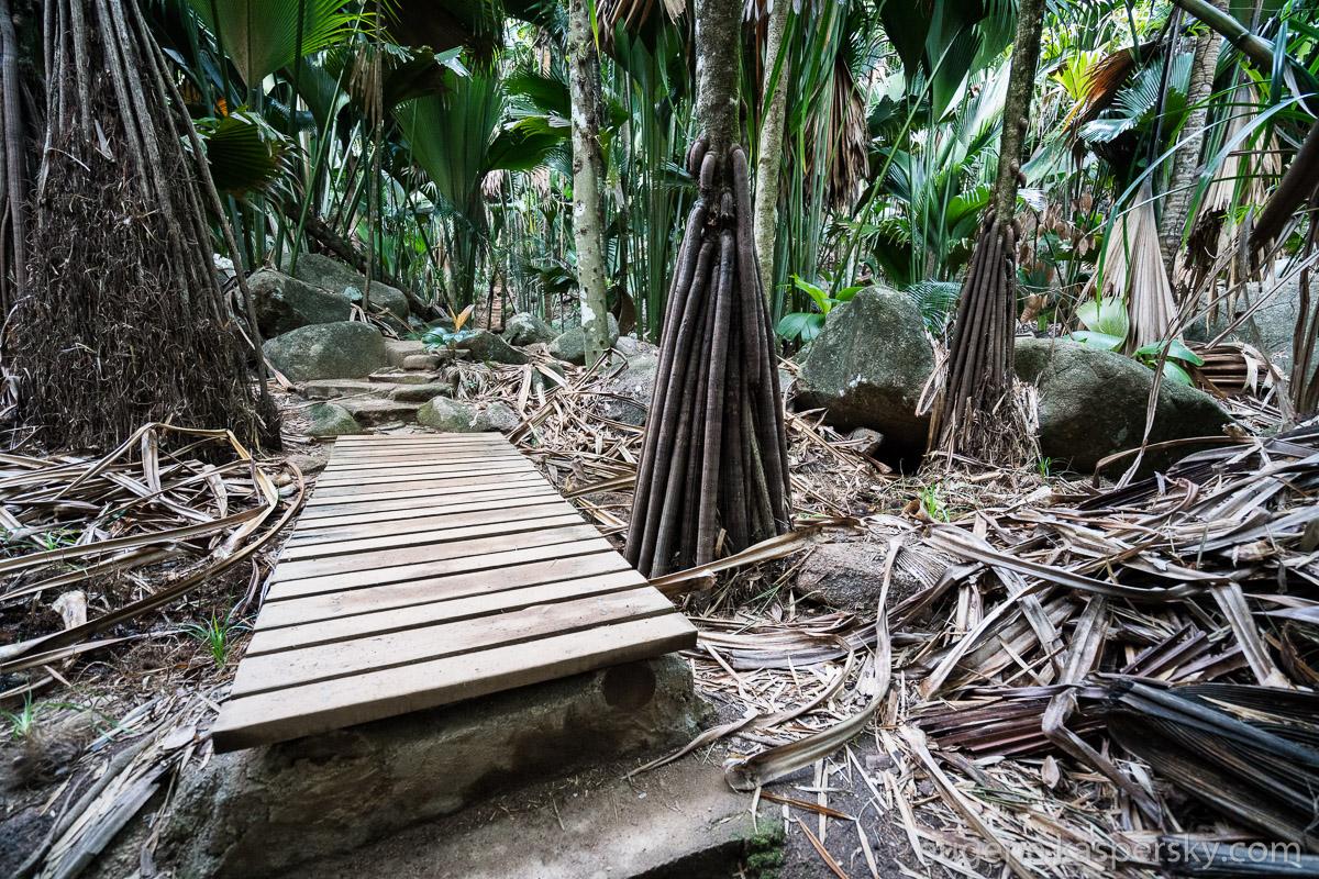 seychelles-coconut-27
