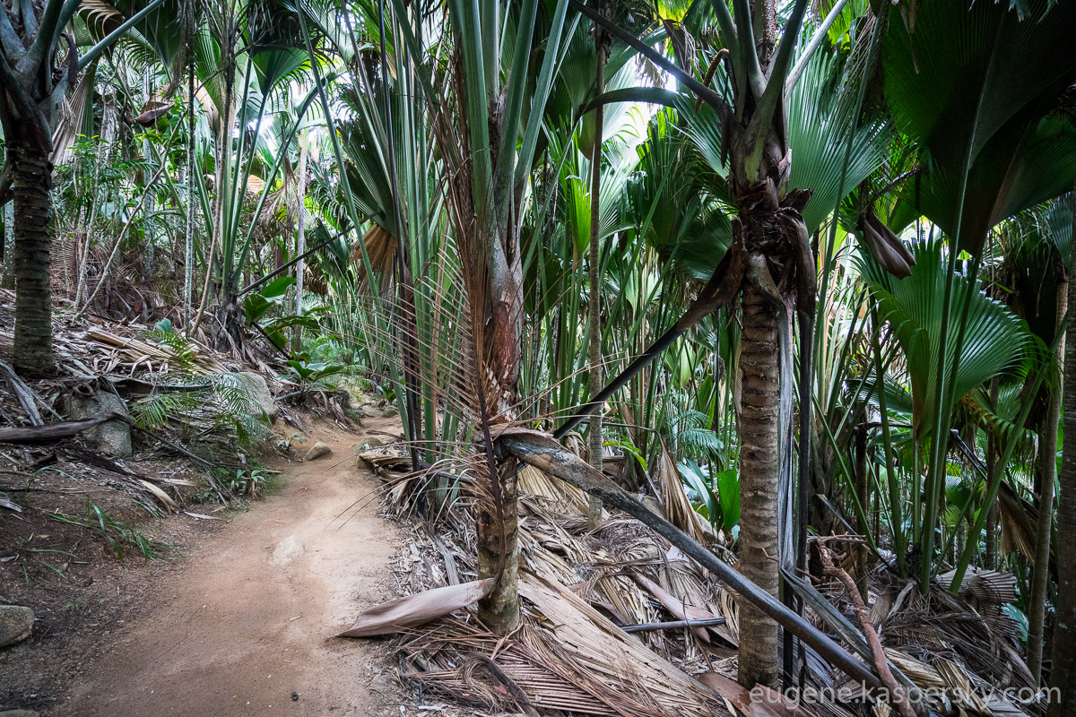 seychelles-coconut-28