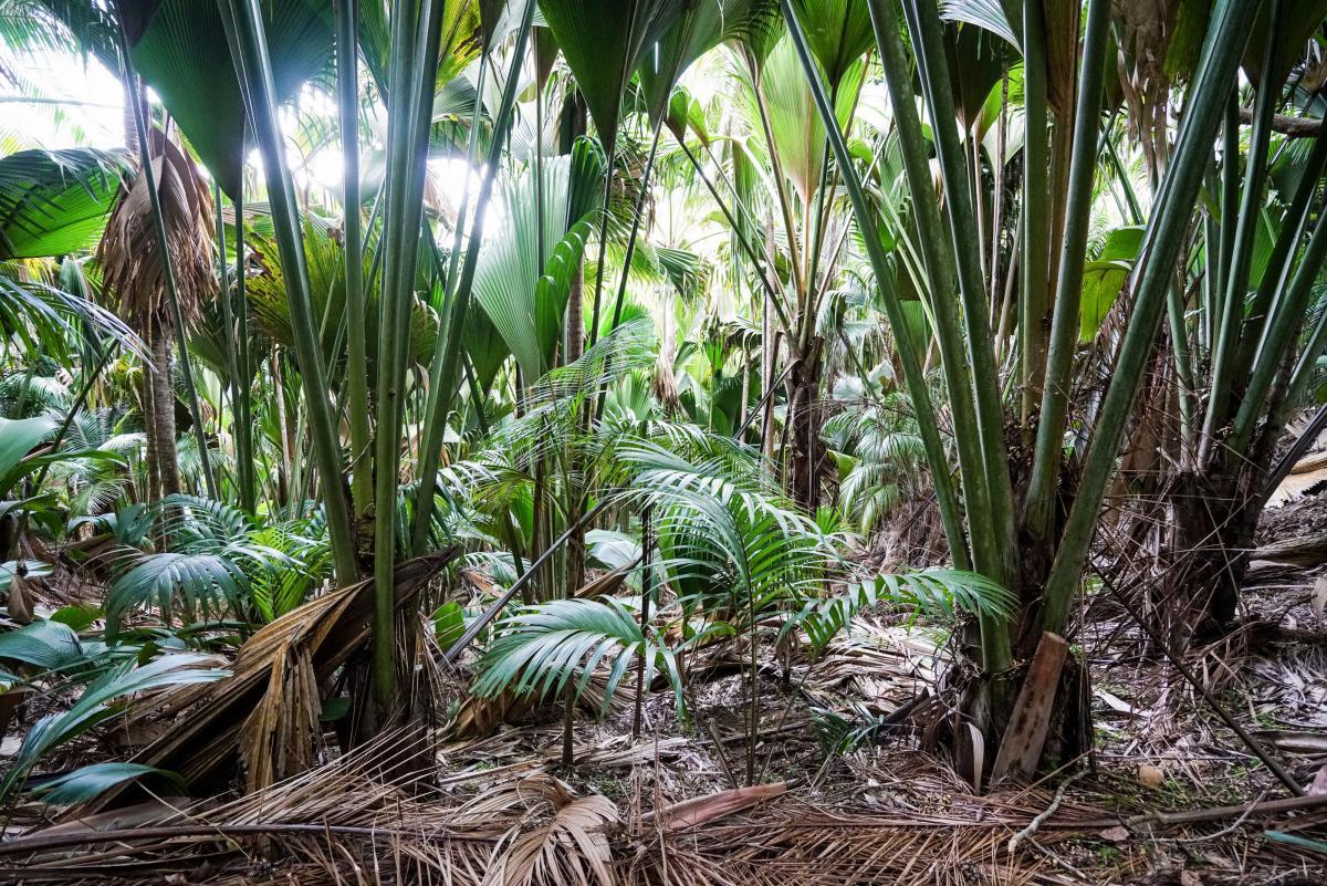 seychelles-coconut-29