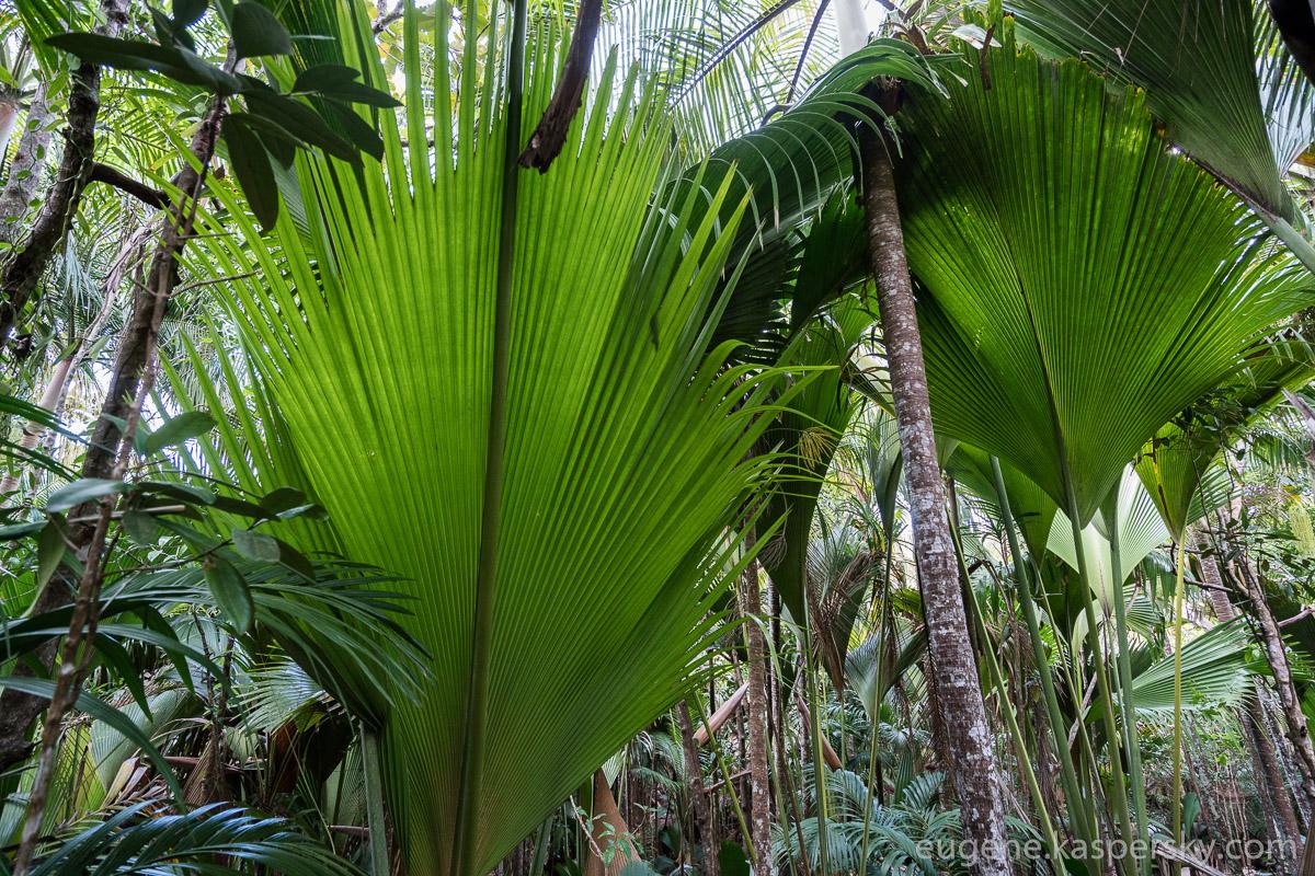 seychelles-coconut-30
