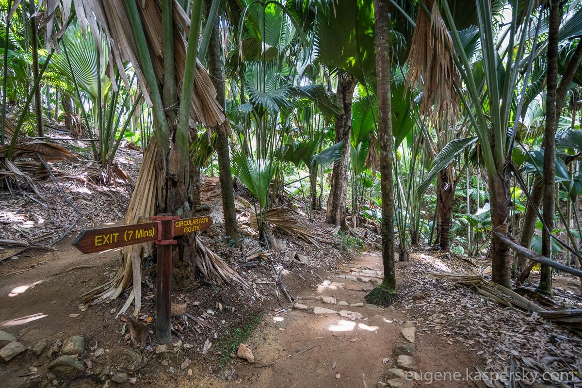 seychelles-coconut-34