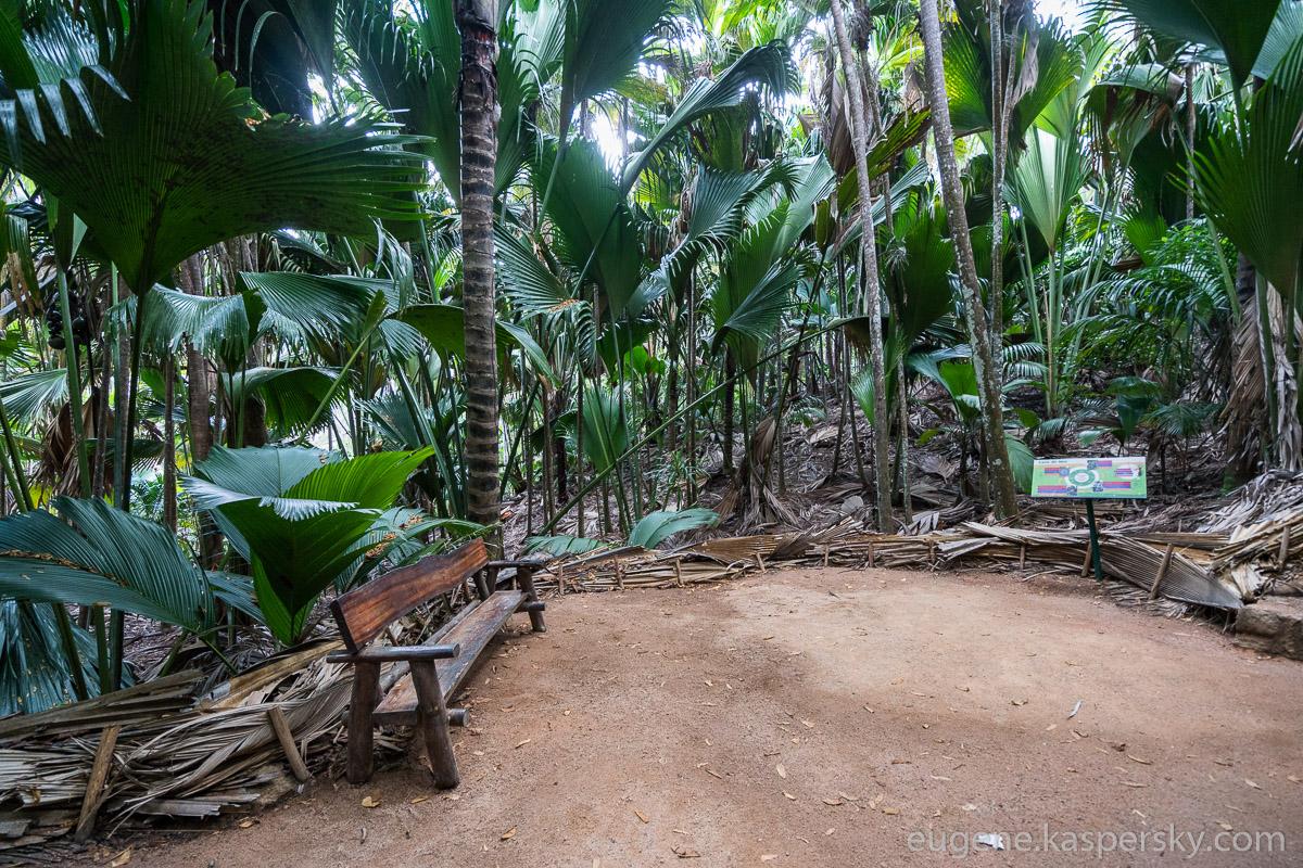 seychelles-coconut-35