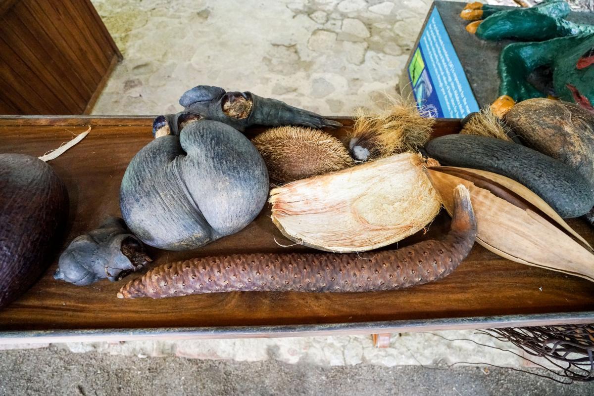 seychelles-coconut-36