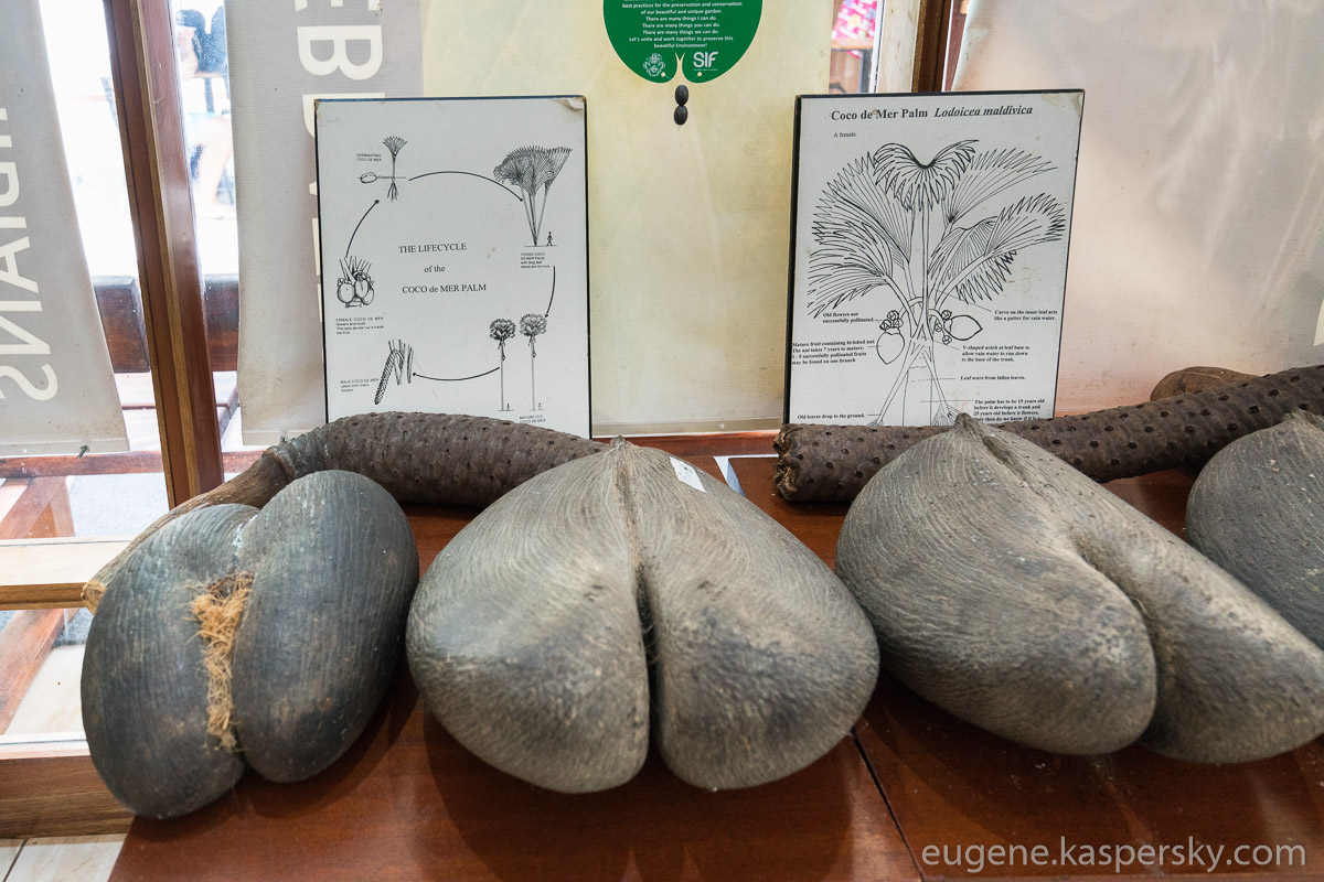 seychelles-coconut-37