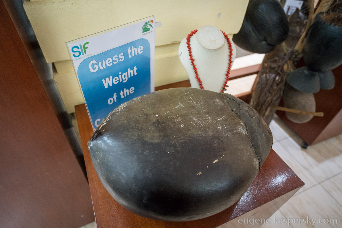 seychelles-coconut-38