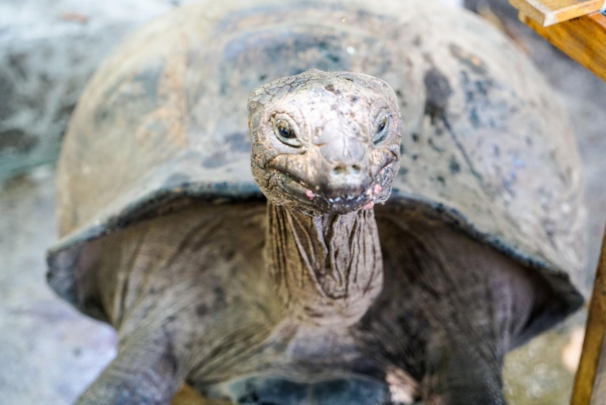 seychelles-turtles-1