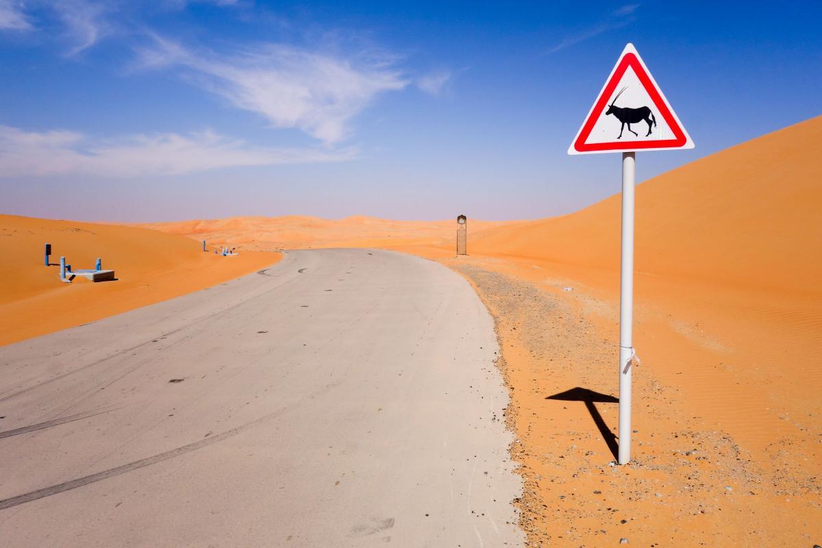 desert-cars-26
