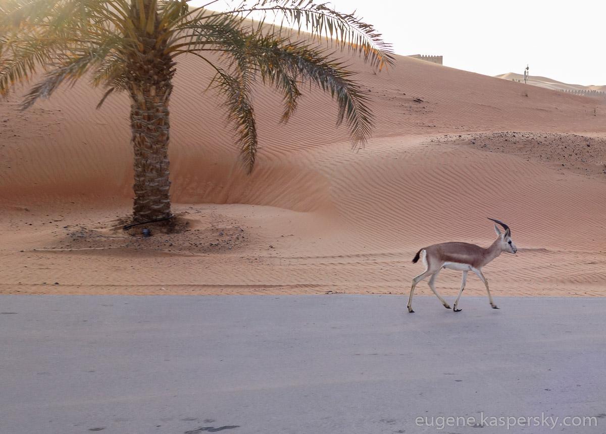 desert-cars-27