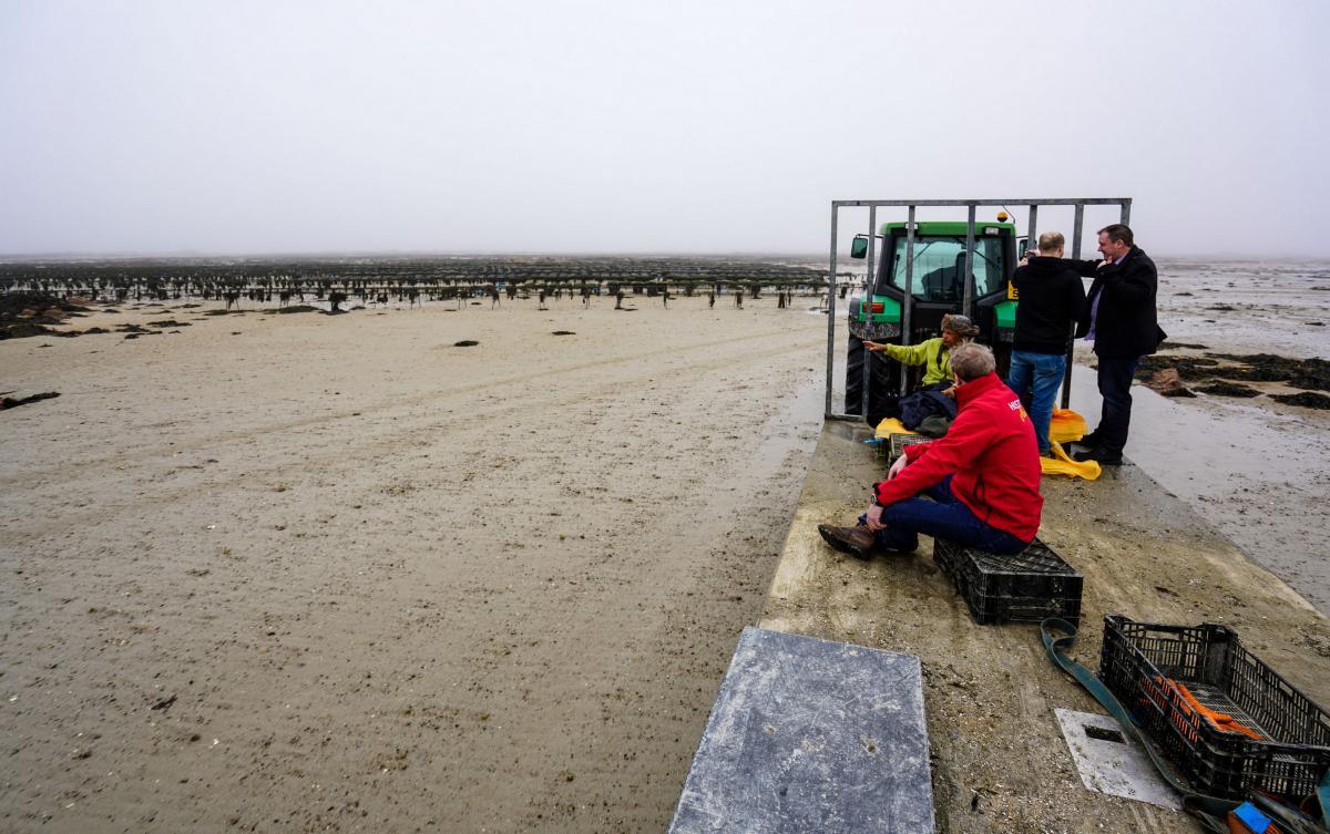 jersey-uk-oyster-farm-5