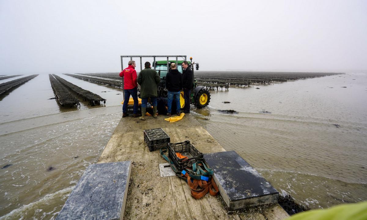 jersey-uk-oyster-farm-6