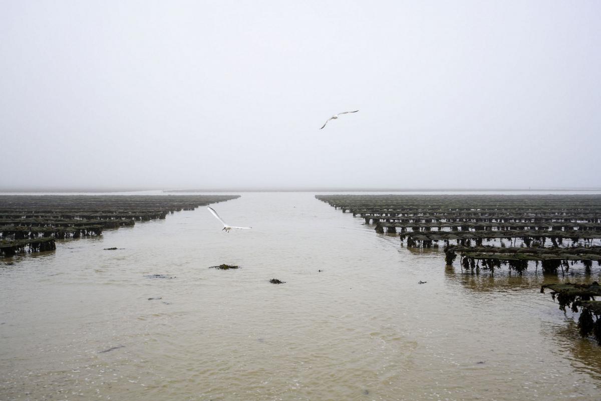 jersey-uk-oyster-farm-7