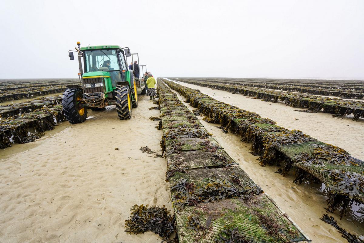 jersey-uk-oyster-farm-12