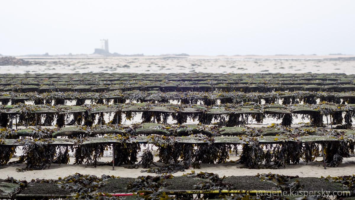 jersey-uk-oyster-farm-11-1
