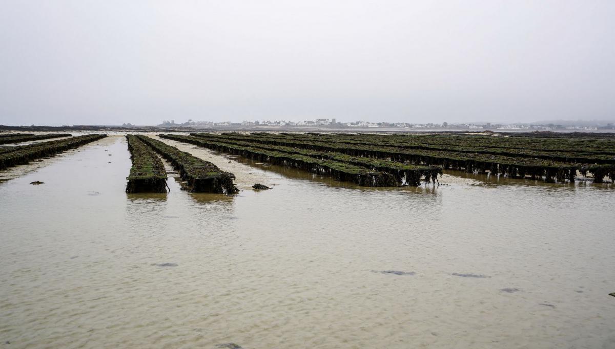jersey-uk-oyster-farm-11-2