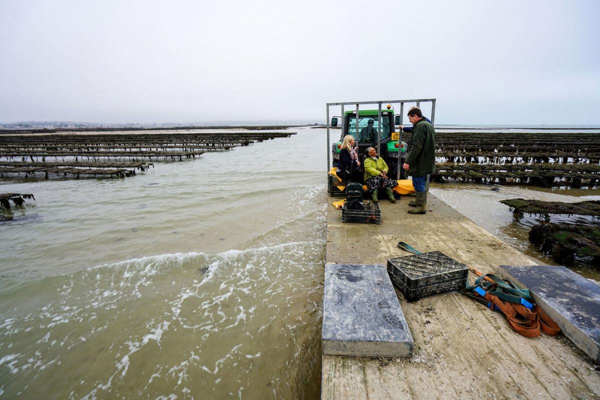 jersey-uk-oyster-farm-18