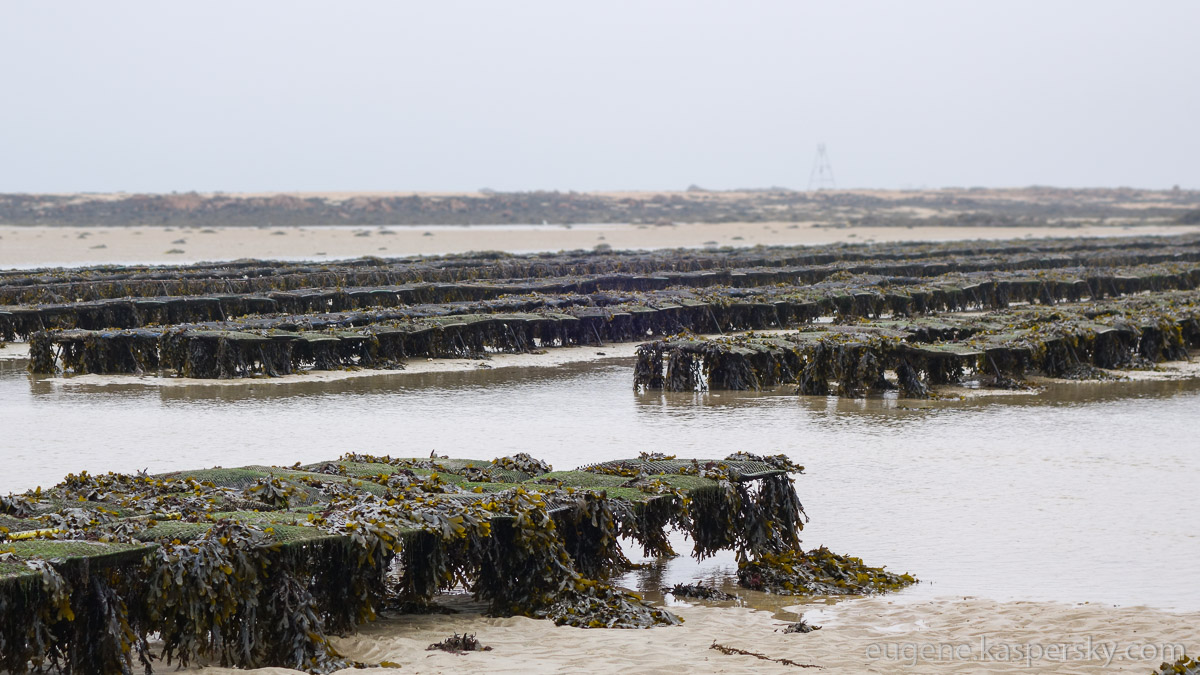 jersey-uk-oyster-farm-20