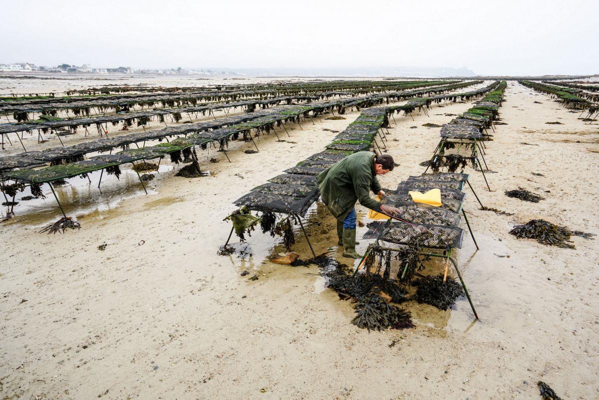 jersey-uk-oyster-farm-27
