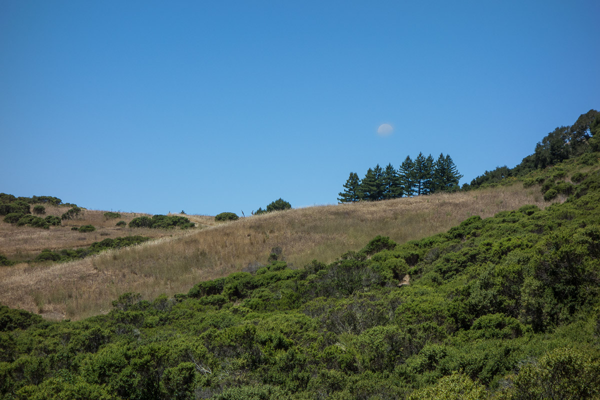 Djerassi Resident Artist Program Moonlight shadow