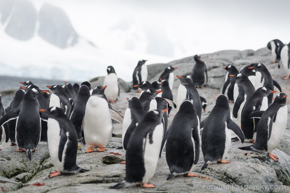 antarctica-penguins-2