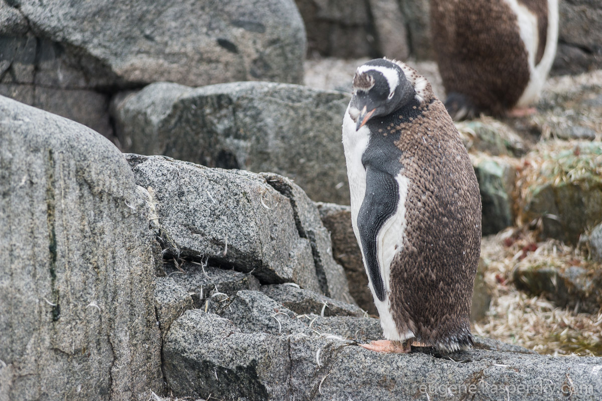 antarctica-penguins-10