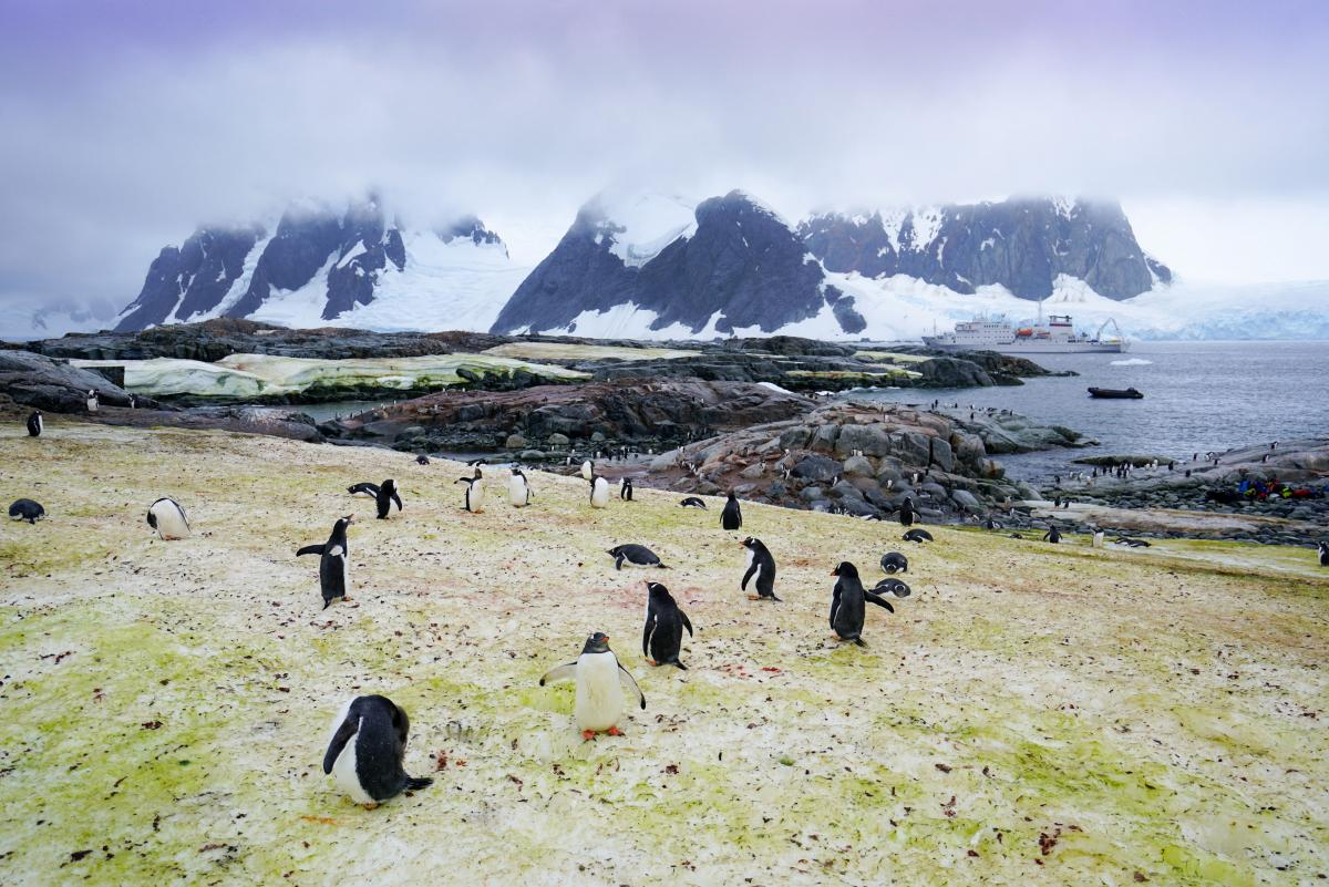 antarctica-penguins-14