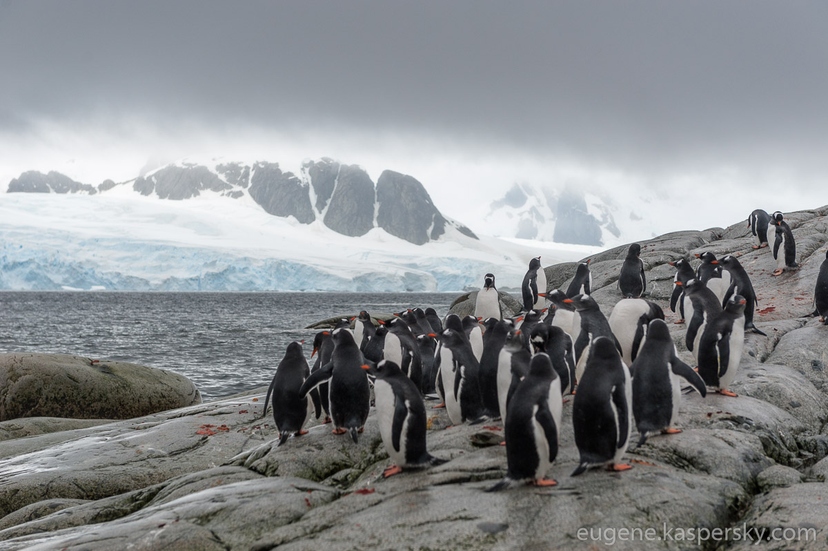 antarctica-penguins-28