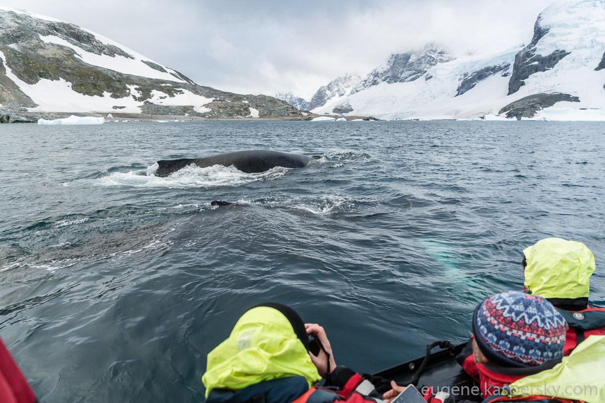 antarctica-whales-7