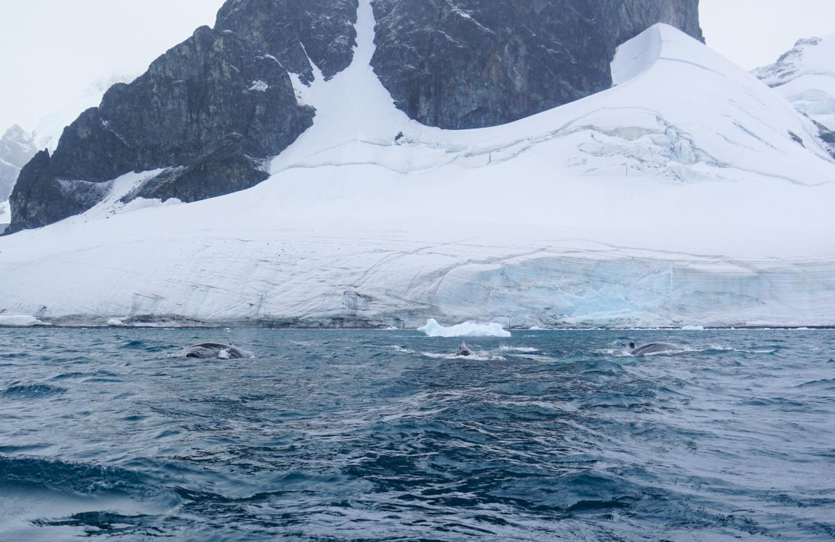 antarctica-whales-8