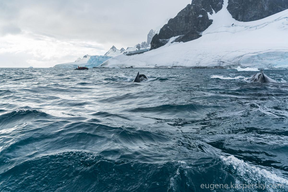antarctica-whales-10