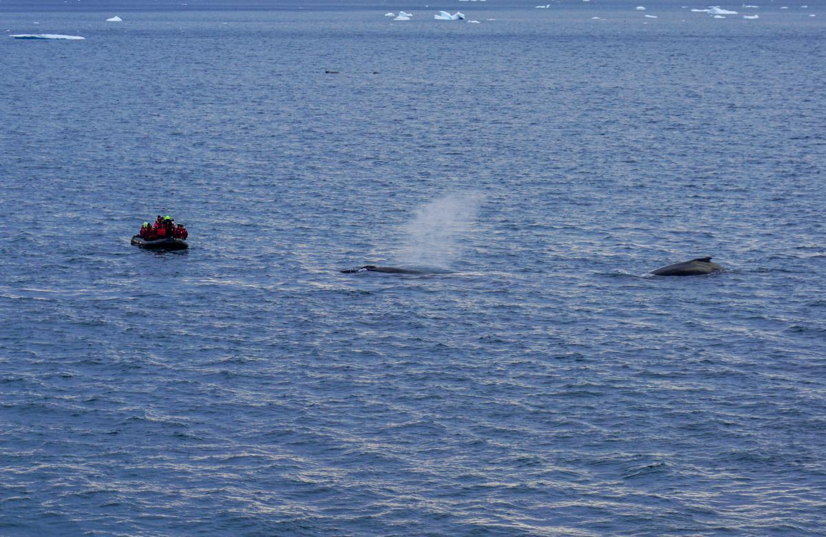 antarctica-whales-12