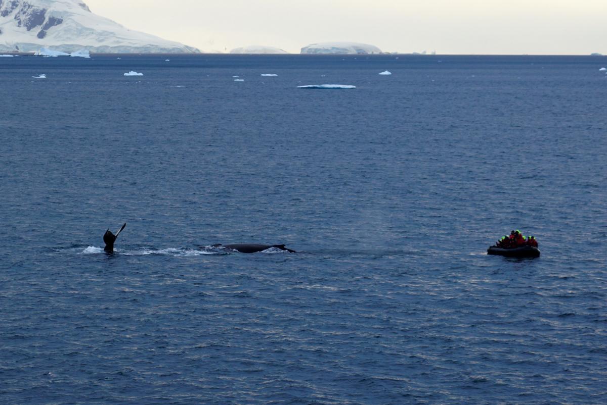 antarctica-whales-13