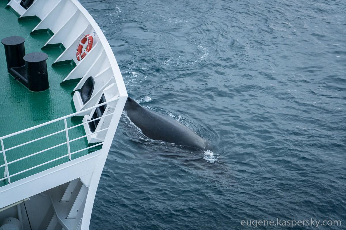 antarctica-whales-15