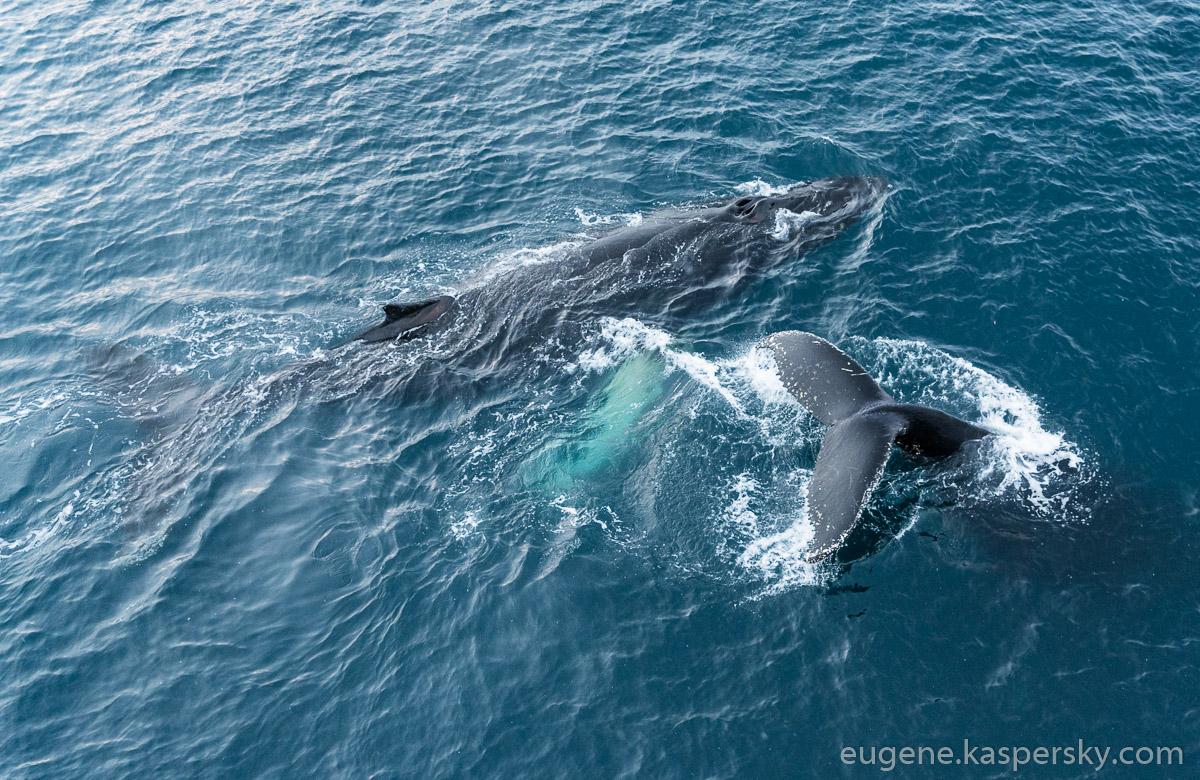 antarctica-whales-18