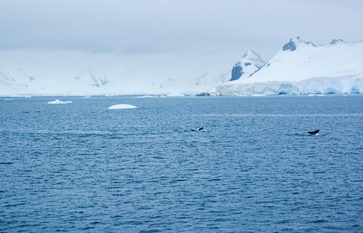 antarctica-whales-19