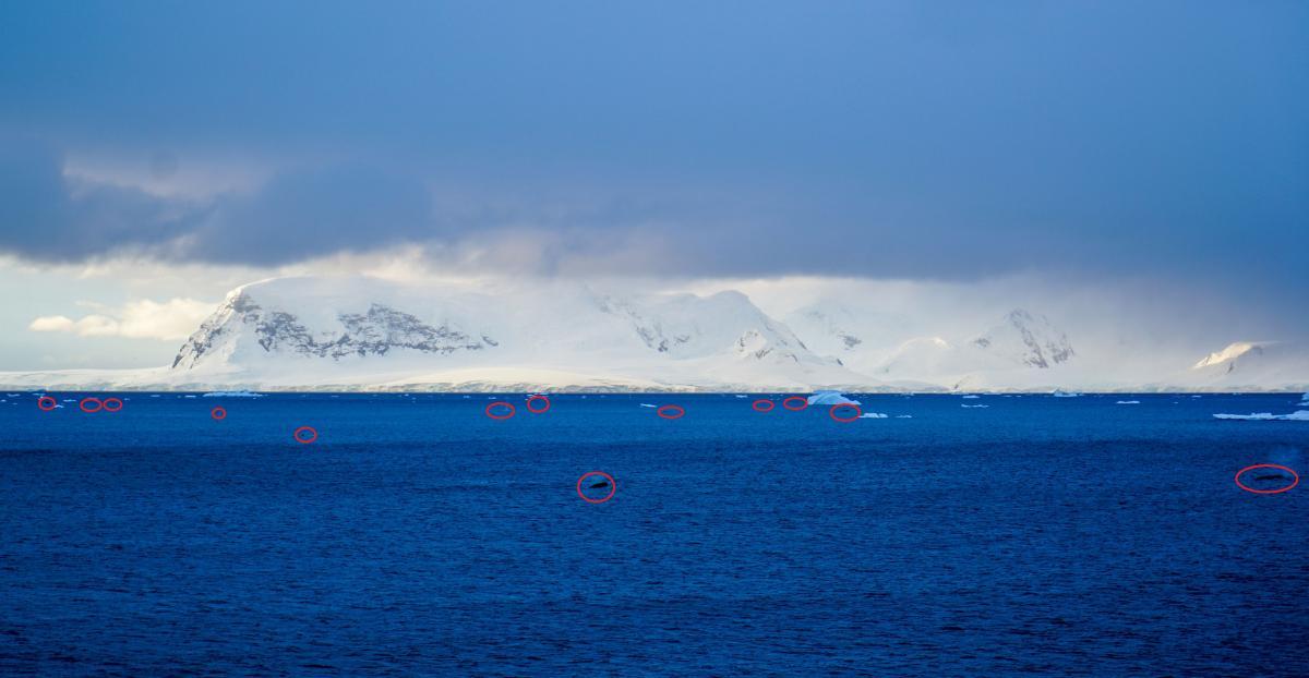 antarctica-whales-20
