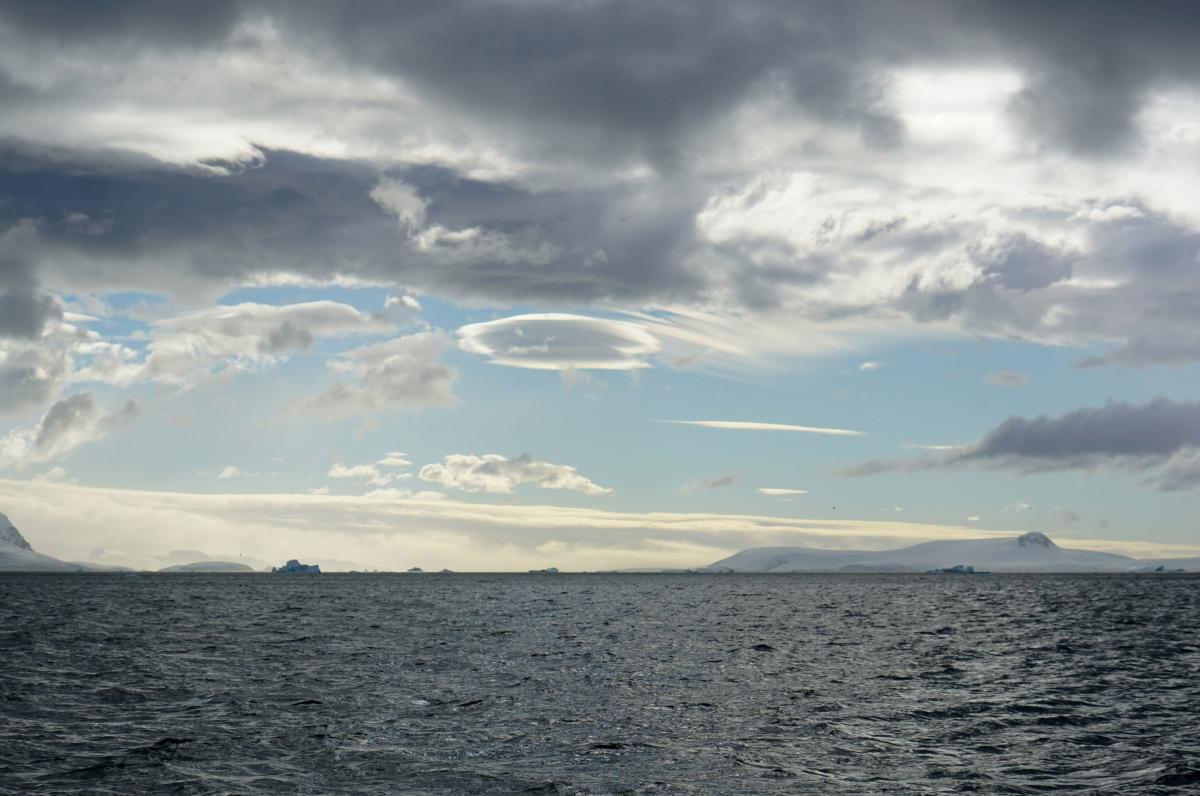 antarctica-whales-21