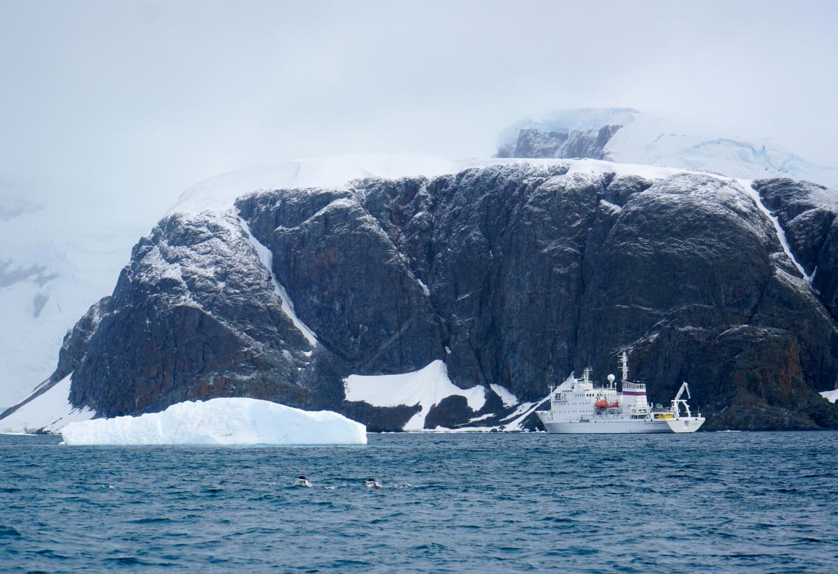 antarctica-whales-22