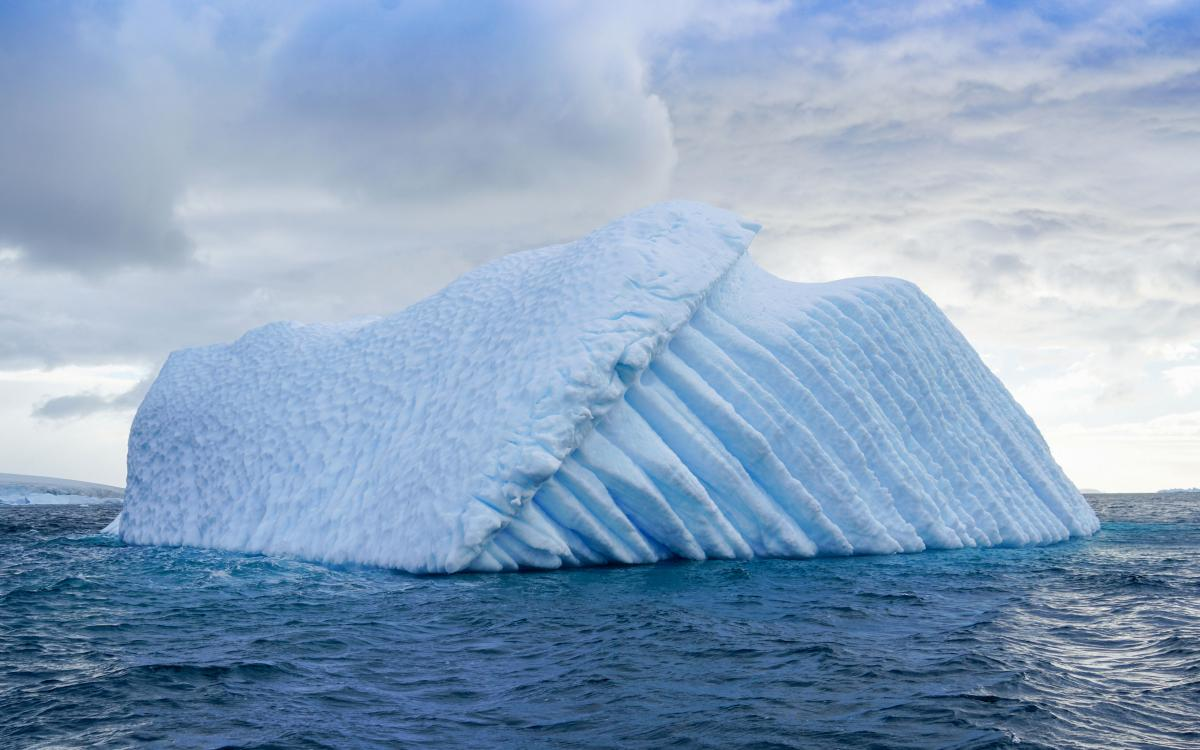 antarctica-whales-23