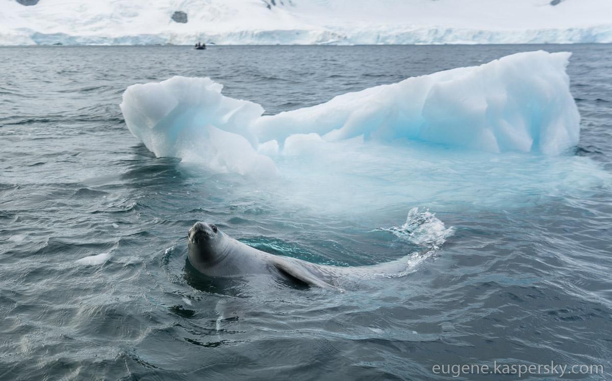antarctica-whales-24