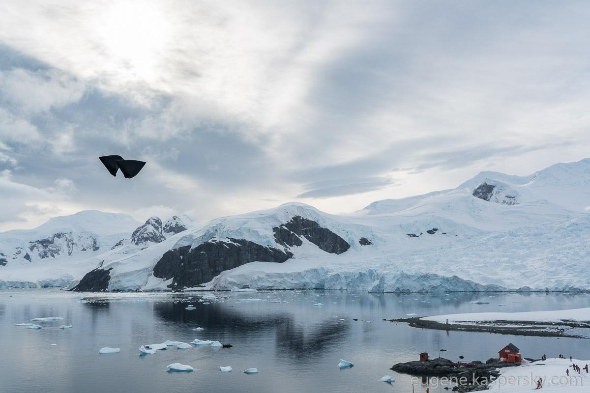 antarctica-sergey-vavilov-vessel-46