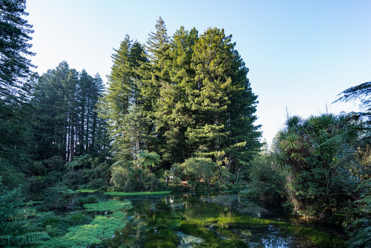 new-zealand-hamurana-springs-giant-trees-21