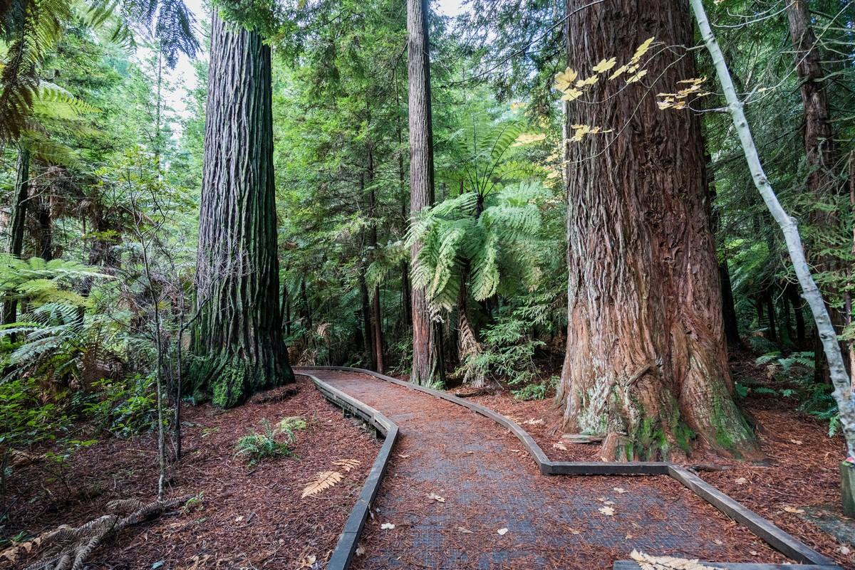 new-zealand-redwoods-park-3