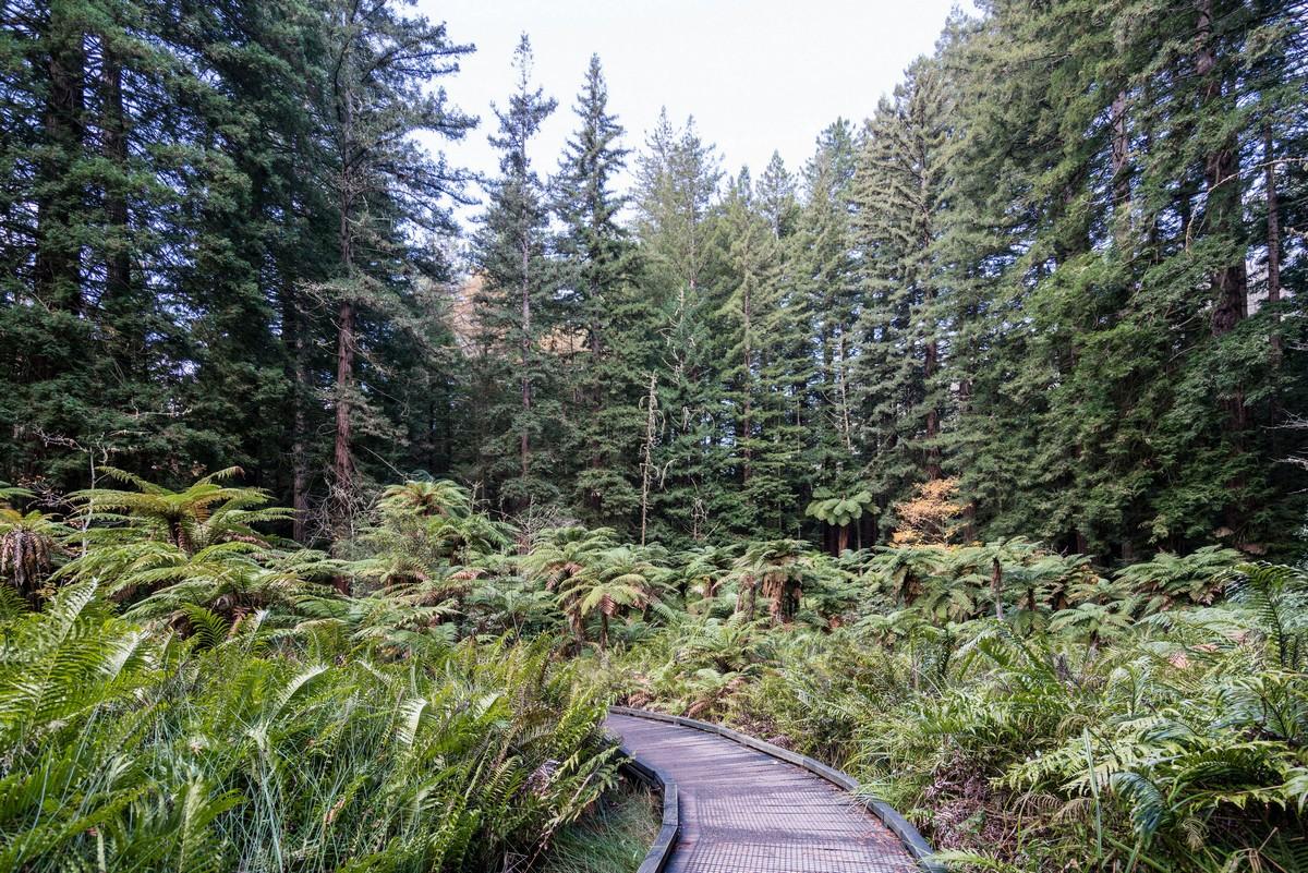 new-zealand-redwoods-park-4