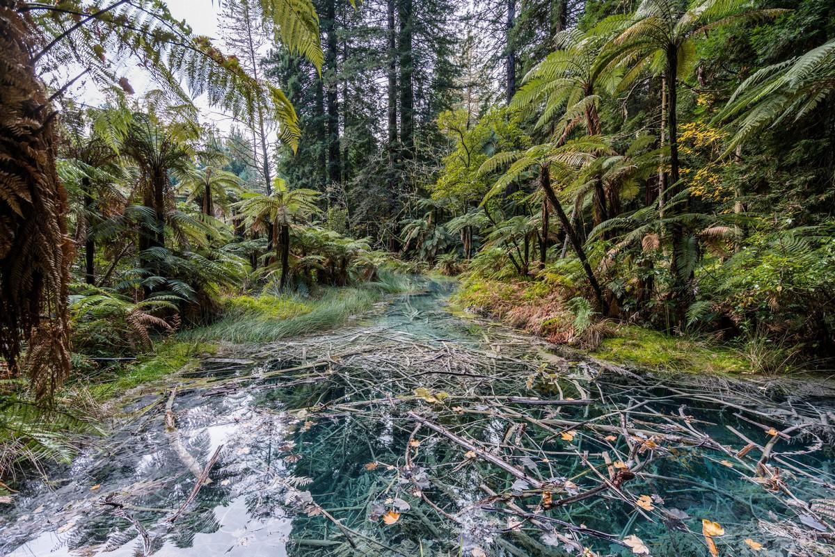 new-zealand-redwoods-park-7