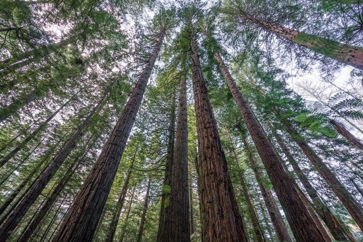 new-zealand-redwoods-park-8