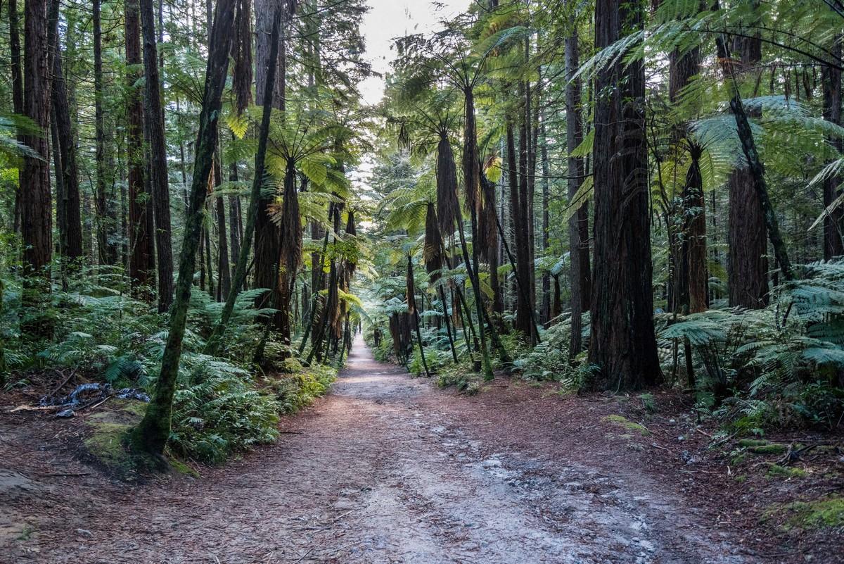 new-zealand-redwoods-park-10
