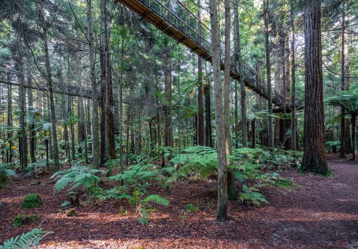new-zealand-redwoods-park-11