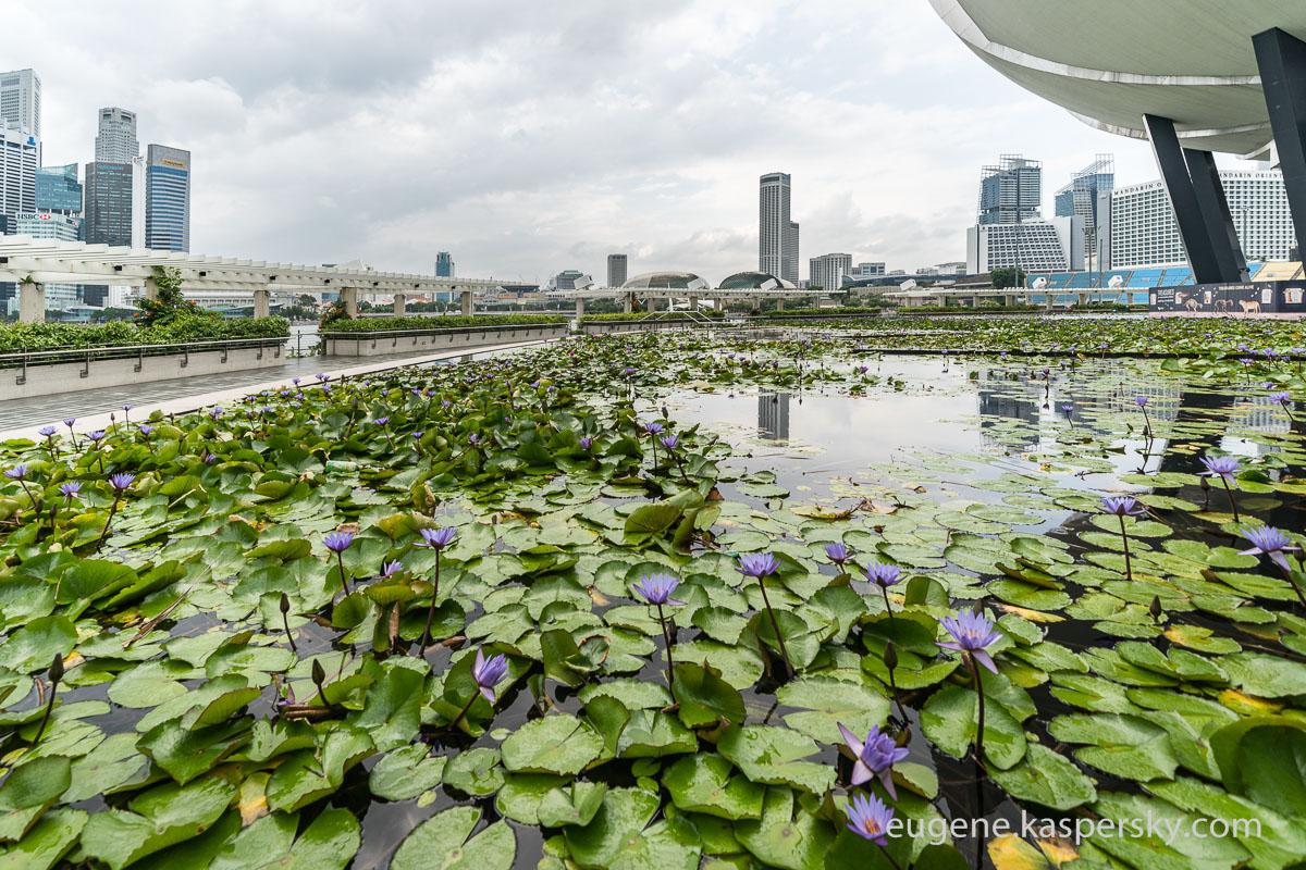 singapore-singapore-21