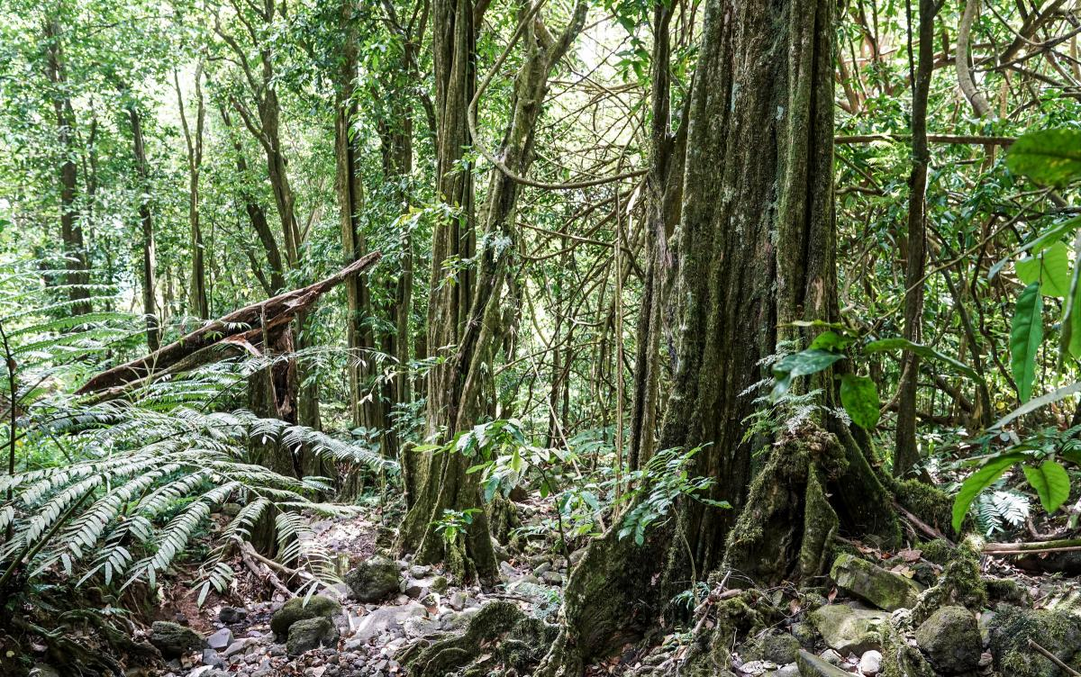 strange-forest-13