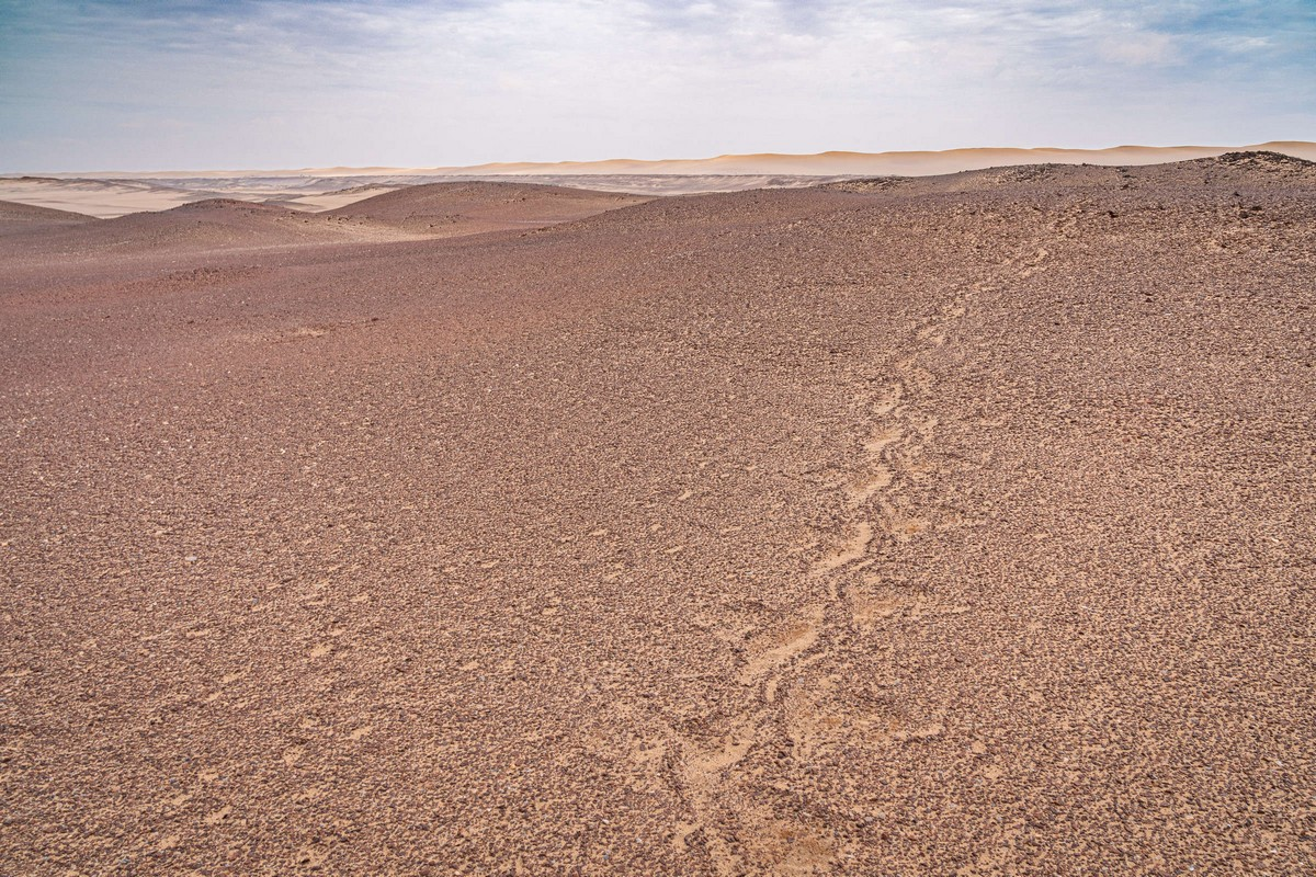 Намибия, день подвига: Берег Скелетов. Часть 1. zDSC02536